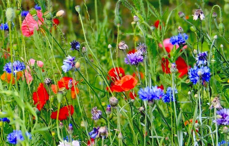 цветочный газон